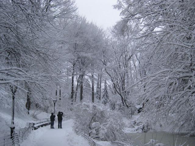 Snowy in New York City (MM)