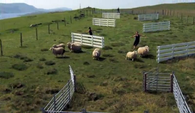 AR25_Leg3_Sheep